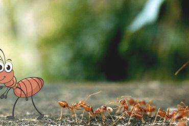 Stresstypen im Vergleich –die tüchtige Biene