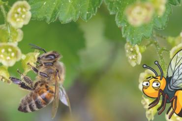 Stresstypen im Vergleich – die hyperaktive Ameise