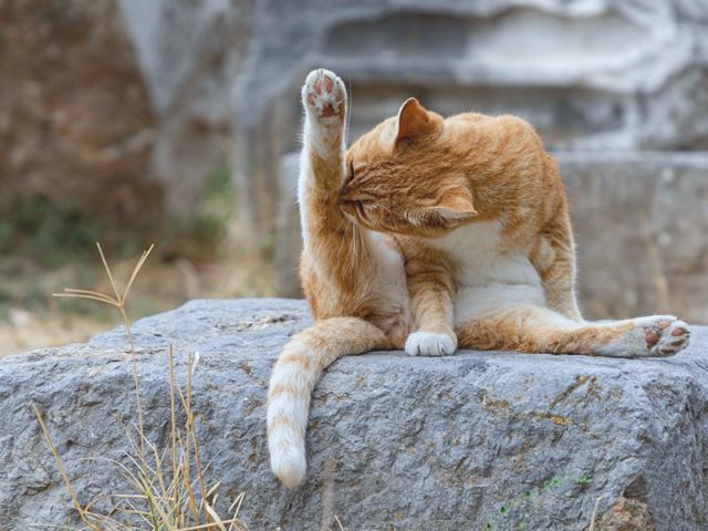Kreativ Yoga Katze